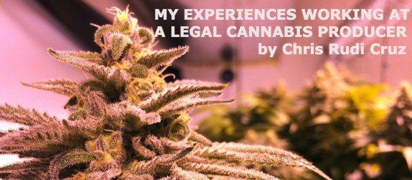 cannabis-lr